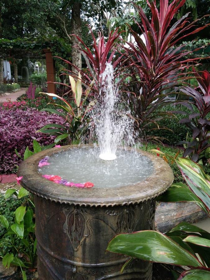Schöne Blume in malaysischer Landwirtschaft, in Gartenbau u. in Agrotourism Asiens lizenzfreie stockbilder