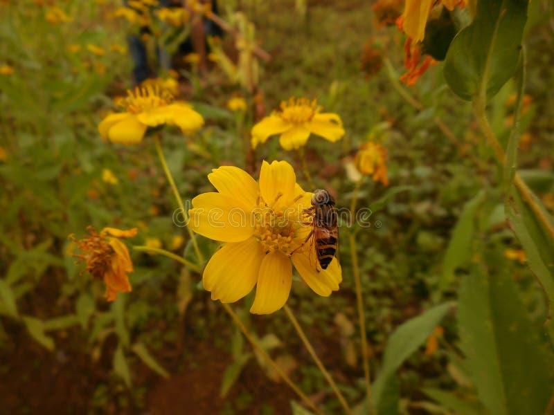 Schöne Blume und schöne Biene lizenzfreies stockbild