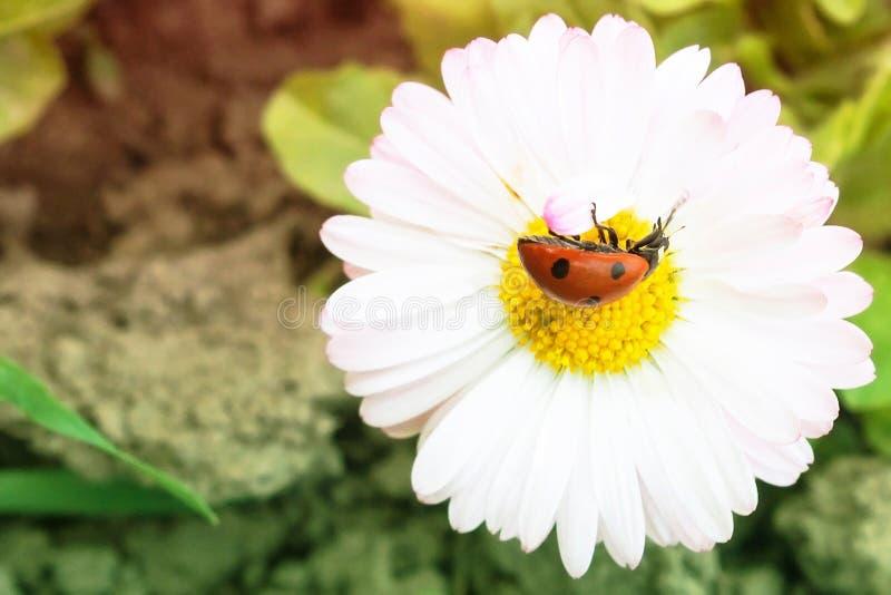 Schöne Blume und Insekt stockbilder
