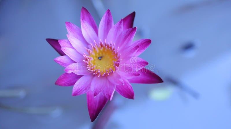 Schöne Blume und Natur lizenzfreies stockbild