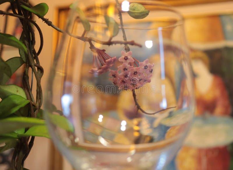 Schöne Blume und Natur lizenzfreie stockfotos