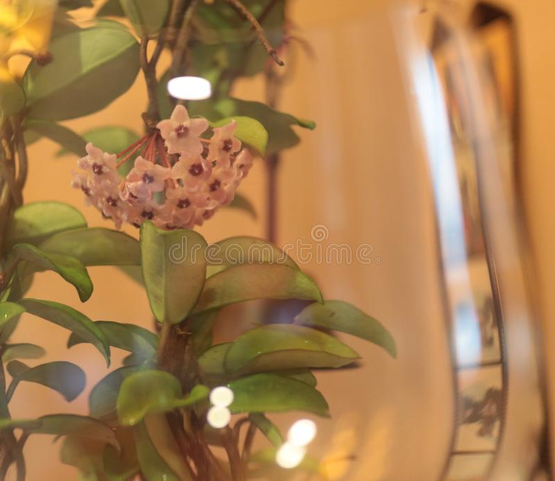 Schöne Blume und Natur stockbild