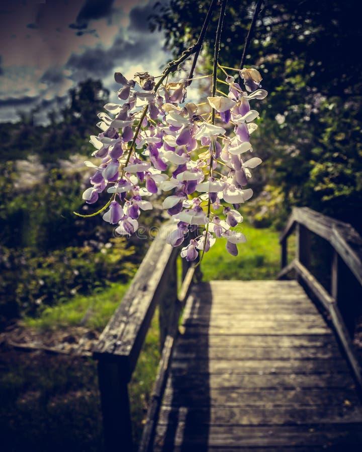 Schöne Blumen über der Brücke stockfoto