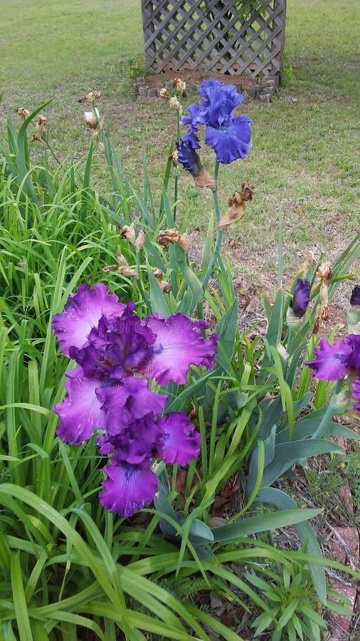 Schöne Blumen stockbilder