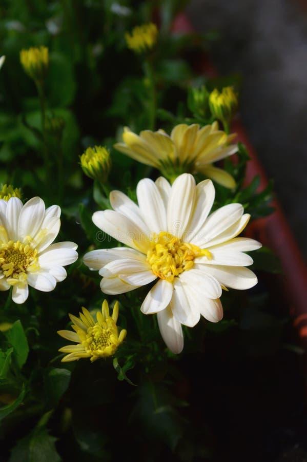 Schöne Blumen stockbild
