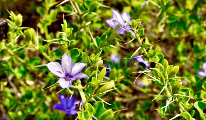 Schöne Blumen stockfotografie