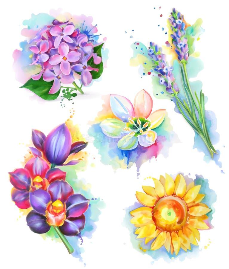 Schöne Blumen, Aquarellanstrich lizenzfreie abbildung
