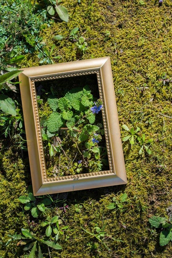 Schöne Blumen der Baumblüten-Blüte in einem Rahmen stockfotos