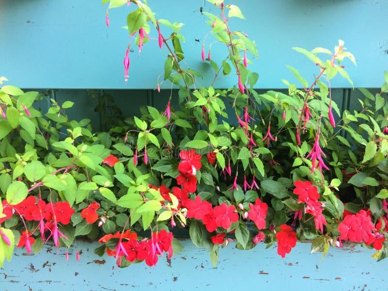 Schöne Blumen der Nahaufnahme im Frühjahr stockfotos