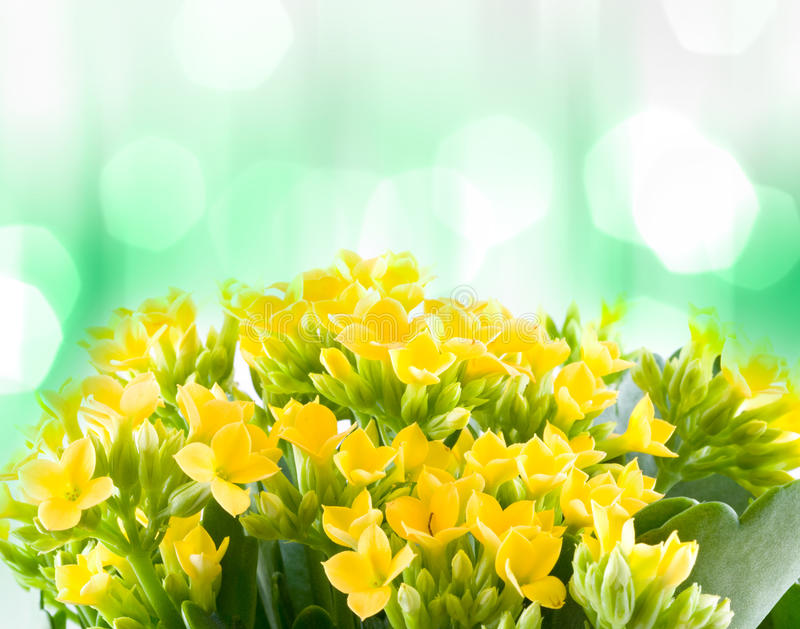 Schöne Blumen des Makrofrühlinges. stockfoto
