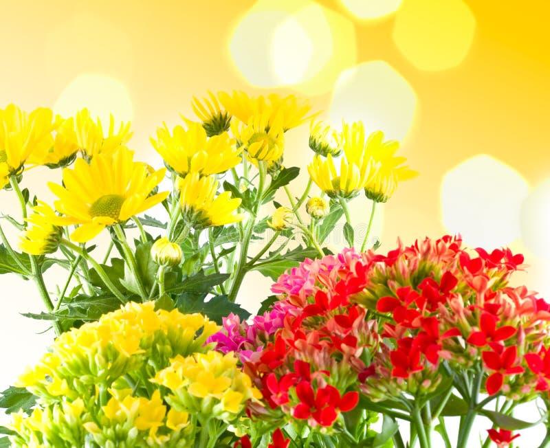Schöne Blumen des Makrofrühlinges. stockbilder