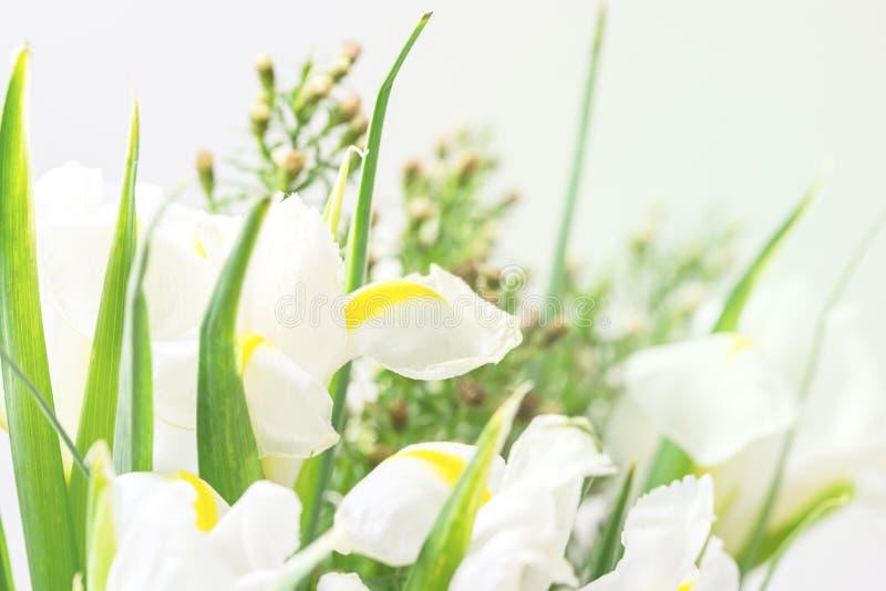 Schöne Blumen extrahieren Hintergrund-Frühlings-Sommer-Hintergrund mit Blumen entspringen getonten Blumen horizontale die Osterfe stockfoto