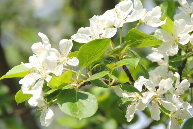 Schöne Blumen machen Ihre Augen helle Farben stockfotografie