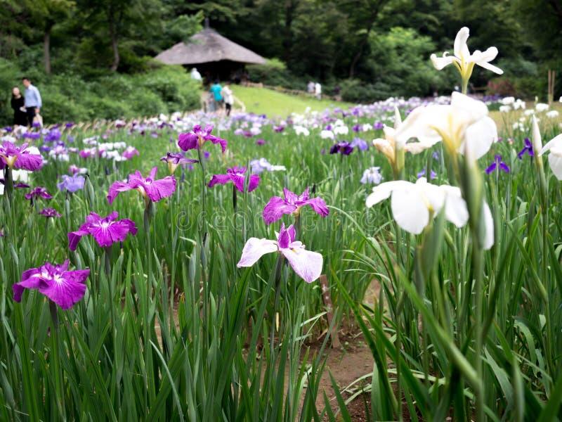 Schöne Blumen in Meiji Jingu Park lizenzfreies stockfoto