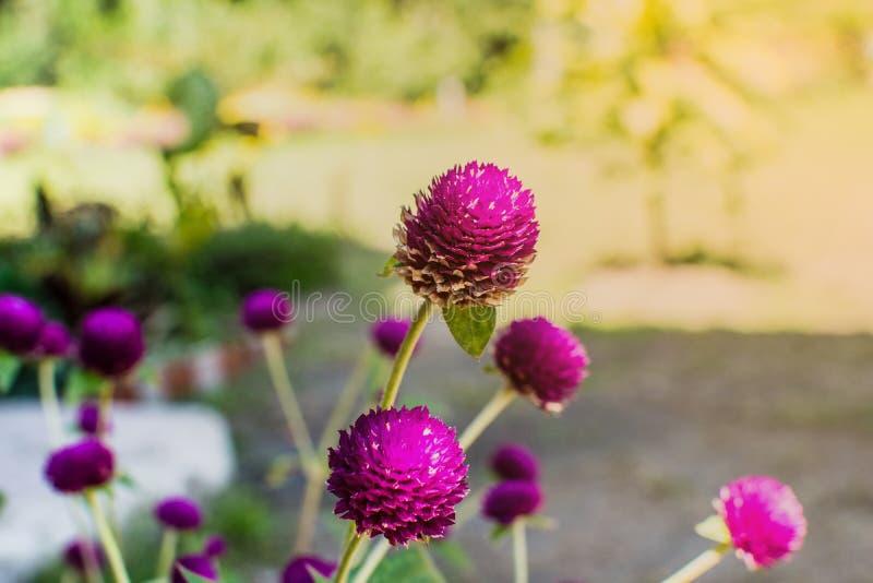 Schöne Blumen mit hellem Sonnenschein stockbild