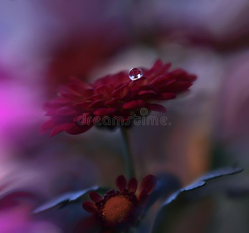 Schöne Blumen reflektierten sich im Wasser, künstlerisches Konzept Ruhige abstrakte Nahaufnahmekunstphotographie Blumenphantasied lizenzfreie stockfotografie