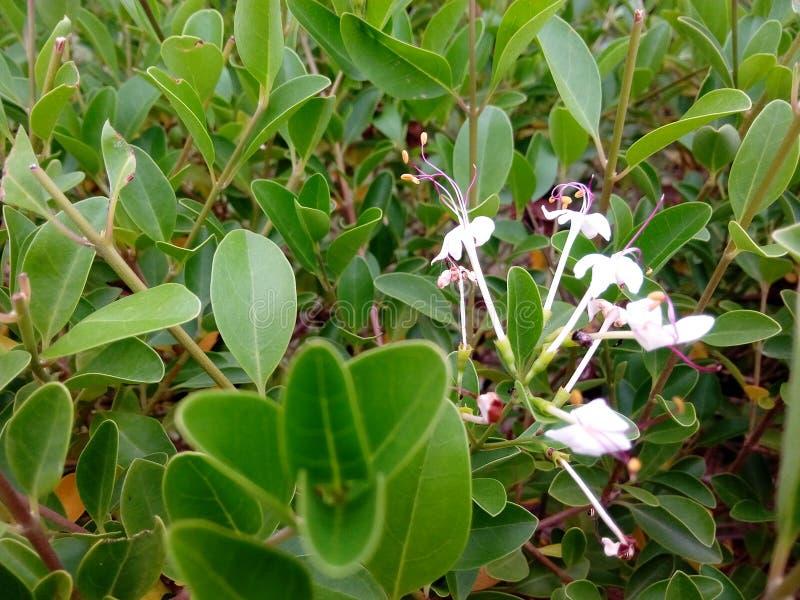 Schöne Blumen u. Blätter lizenzfreie stockfotos