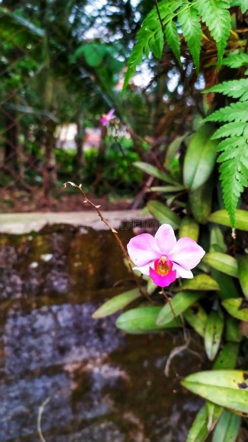 Schöne Blumen und Anlagen am grandma& x27; s-Hinterhofhaus 1 lizenzfreie stockfotos