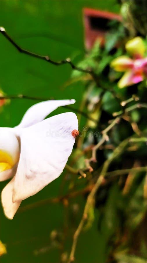 Schöne Blumen und Anlagen am grandma& x27; s-Hinterhofhaus 6 lizenzfreies stockfoto