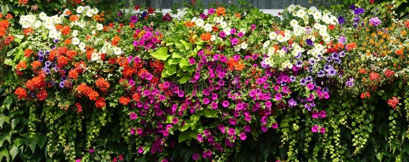 Schöne Blumenwand im italienischen Garten lizenzfreie stockfotografie