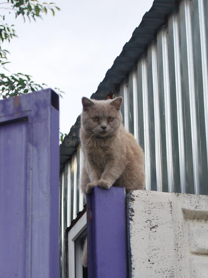 Schöne braune Katze auf dem Zaun stockfotografie