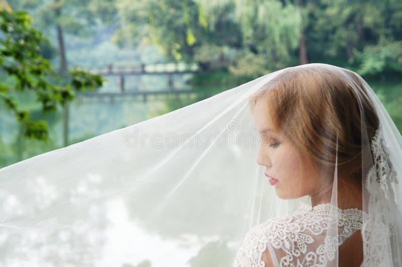 Schöne Braut in einem Spitzen- Hochzeitskleid unter dem Schleier stockfoto