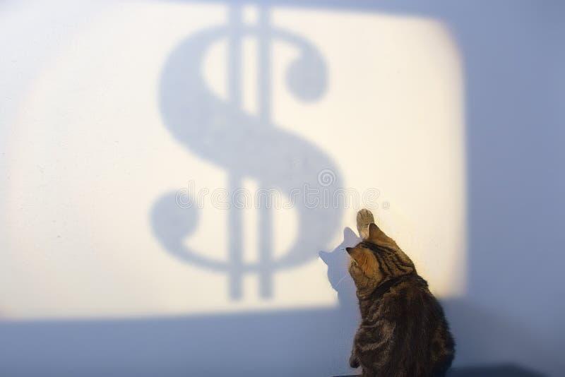 Schöne britische Katze versucht, Dolar-Konzept des Erfolgs, Geschäftsstrategie zu fangen lizenzfreies stockfoto