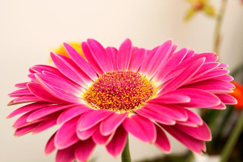 Schöne bunte Blume lizenzfreies stockbild