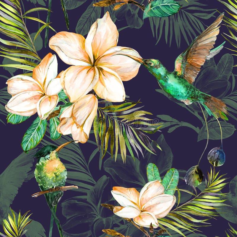 Schöne bunte colibri und Plumeriablumen auf dunklem Hintergrund Exotisches tropisches nahtloses Muster Watecolor-Malerei vektor abbildung