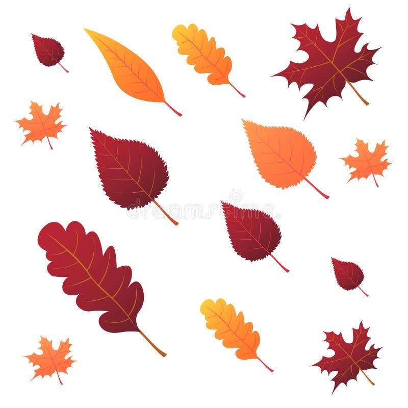 Schöne bunte Herbstblätter der Ansammlung getrennt auf weißem Hintergrund Abbildung lizenzfreie abbildung