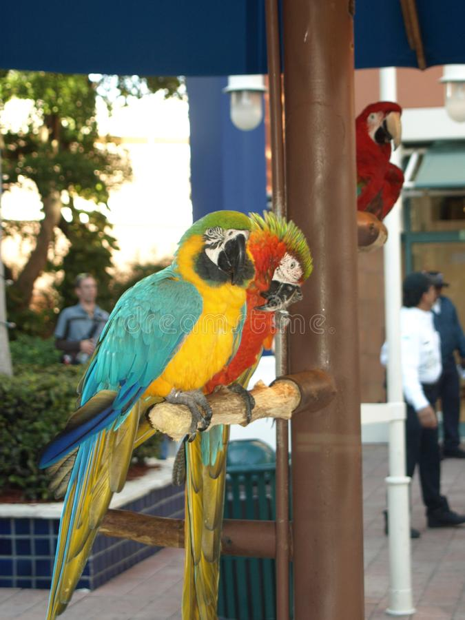 Schöne bunte Papageien lizenzfreies stockbild