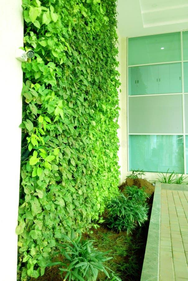 Schöne dekorative Kriechpflanzenanlage auf einer Wand stockfoto