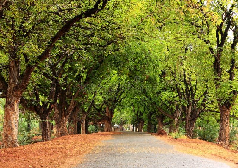 Schöne Dorfstraße in Indien lizenzfreie stockbilder
