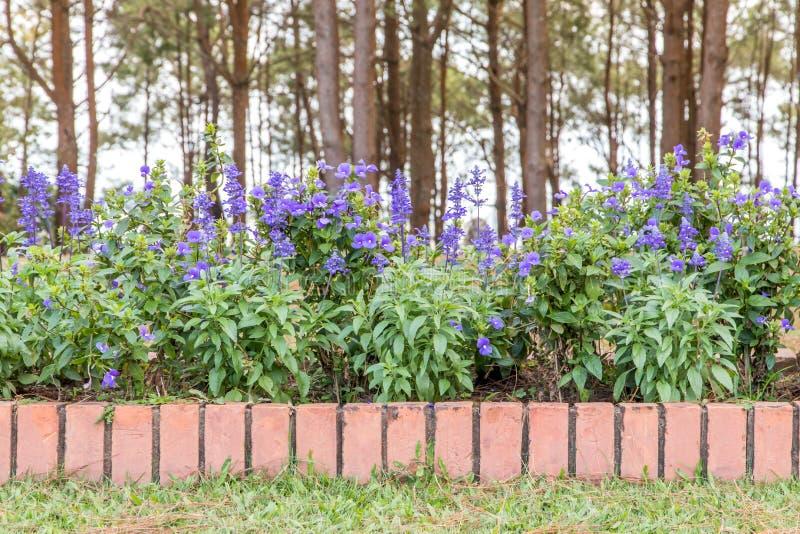 Schöne Ecke des kleinen Gartens mit Blumen, Gartendekoration und Landschaftsgestaltung stockbilder
