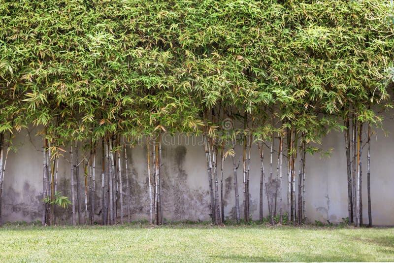 Schöne Ecke des kleinen Gartens mit Blumen, Gartendekoration und Landschaftsgestaltung stockfotografie