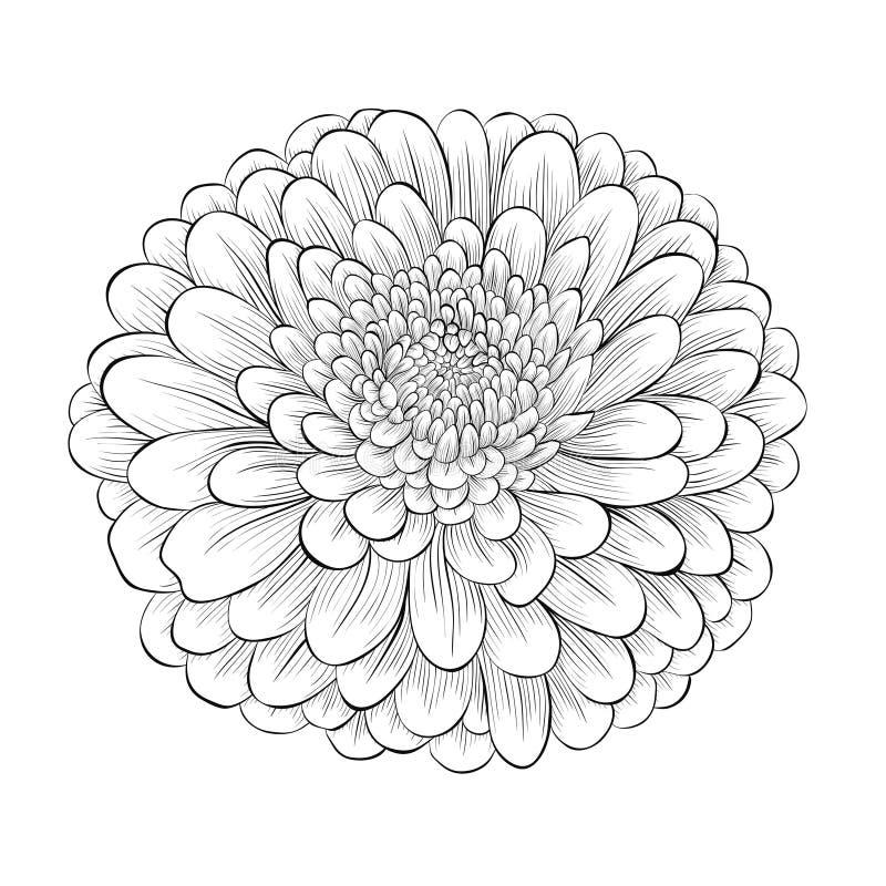 Schöne einfarbige Schwarzweiss-Blume lokalisiert auf weißem Hintergrund lizenzfreie abbildung