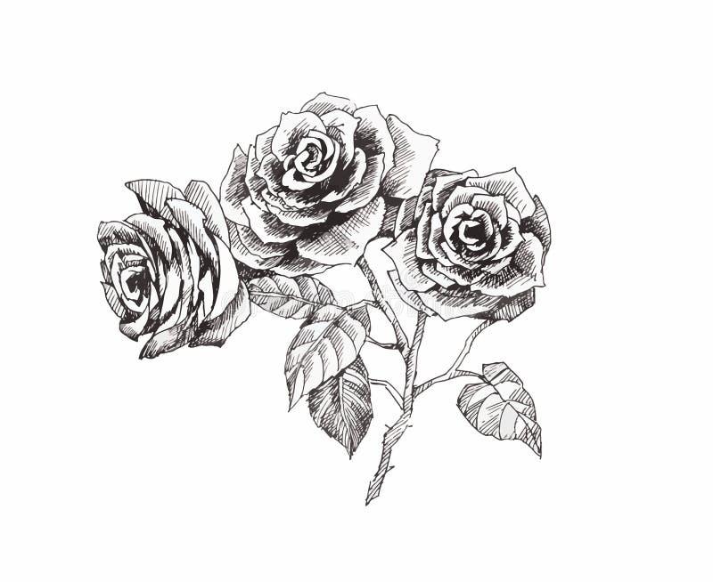 Atemberaubend Schwarz Weiß Malvorlagen Aus Rosen Fotos - Entry Level ...