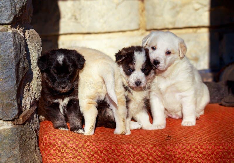 Schöne entzückende Gruppe Schäferhundewelpen in einem äußeren Schutz stockfoto