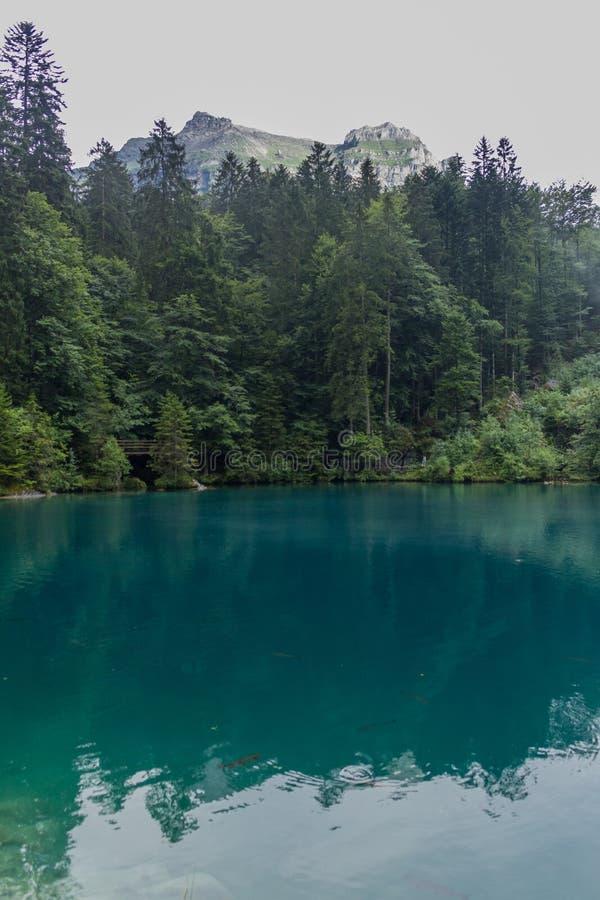 Schöne Erkundungstouren durch die Berge der Schweiz - Blausee/Schweiz stockfotografie