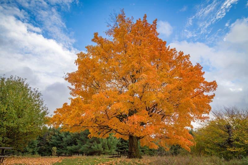 Schöne Fallbäume lizenzfreie stockfotografie