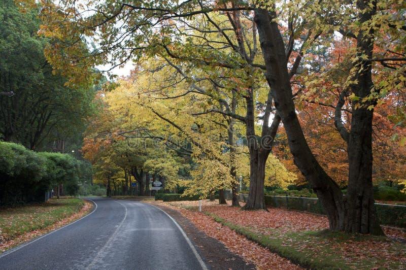 Schöne Fallbäume mit Straßenlaufwerk stockbild
