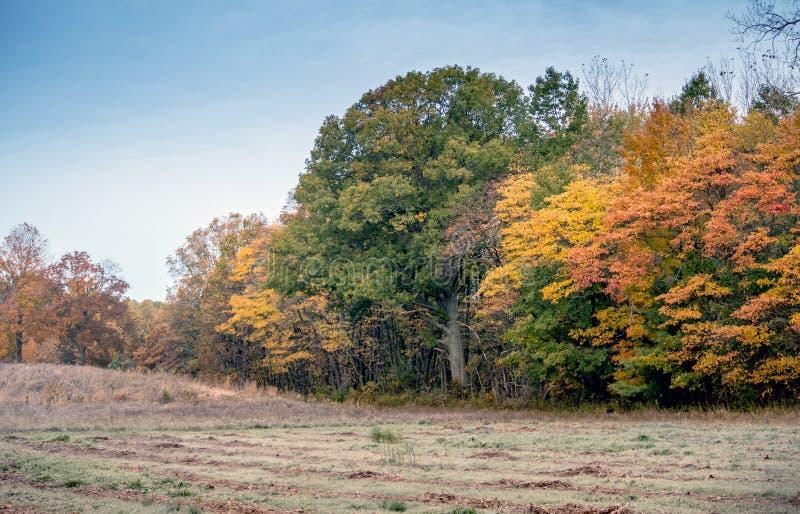 Schöne Fallbäume und ein Fallfeld in Michigan USA stockfoto