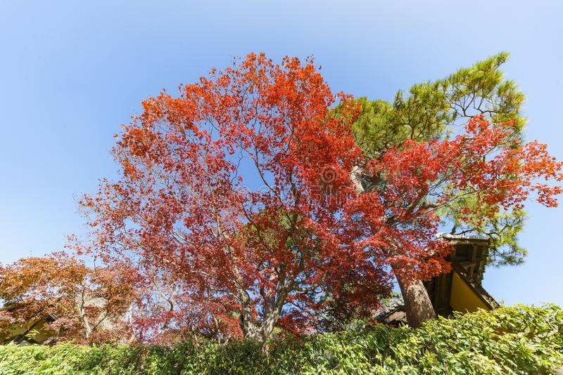 Schöne Fallfarbe in Arashiyama lizenzfreie stockfotografie
