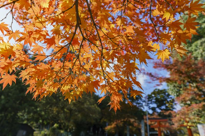 Schöne Fallfarbe nahe Hiyoshi Taisha stockbild