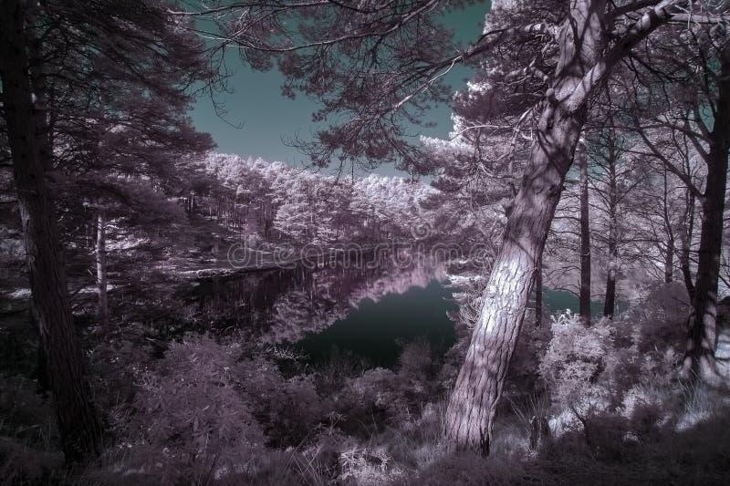 Schöne falsche Farbsurreales Infrarotlandschaftsbild von See a stockbilder