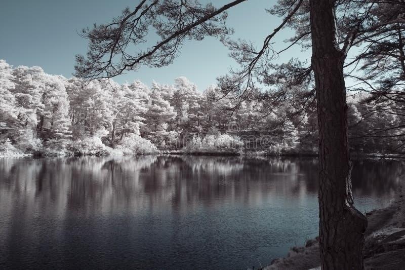 Schöne falsche Farbsurreales Infrarotlandschaftsbild von See a lizenzfreie stockbilder