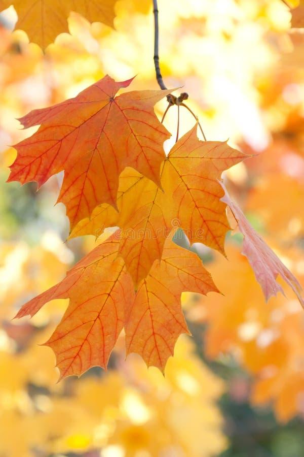 Schöne Farben des Herbstes. lizenzfreies stockfoto