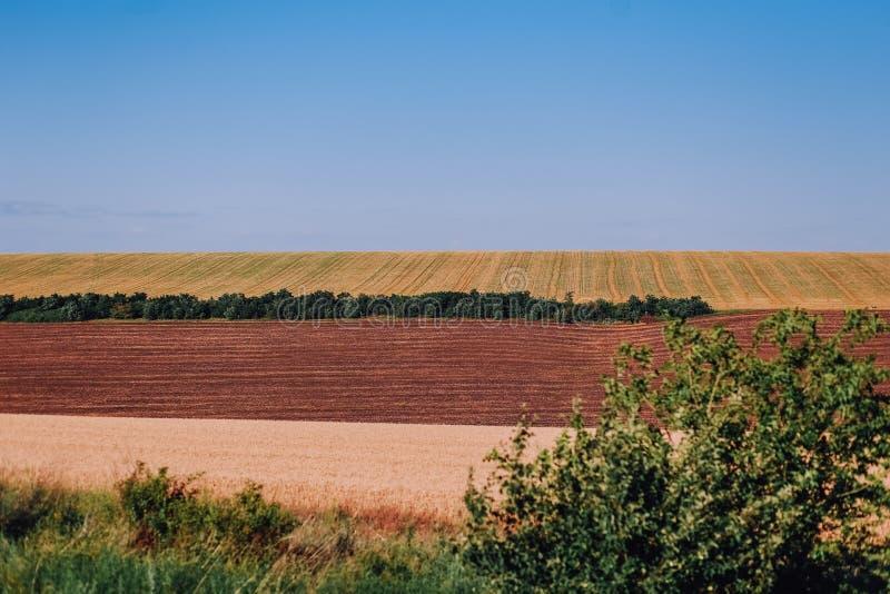 schöne Feldlandwirtschaftliche kulturen rudern Streifenwellen stockfotografie