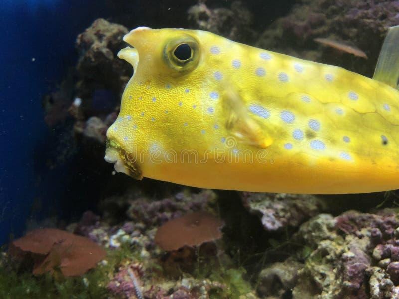 Schöne Fische im Ozean stockfotografie