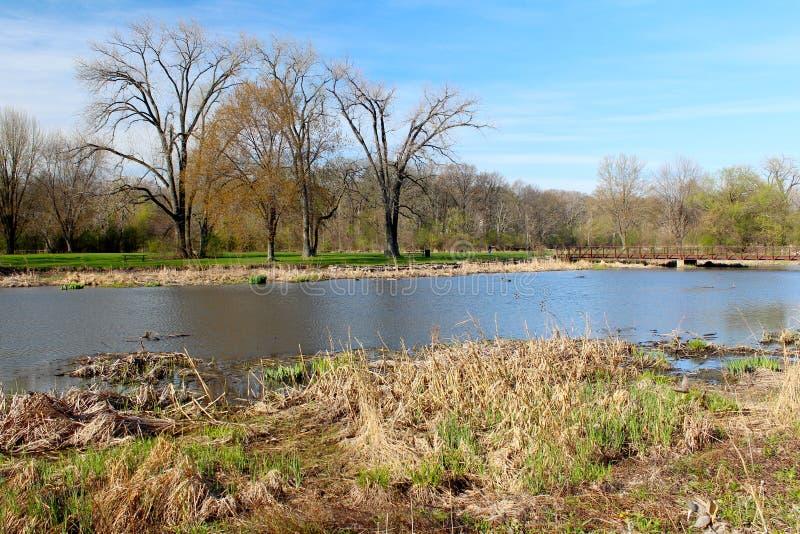 Schöne Frühlingsansicht in den Wildpark der Natur Ist ein grünes Feld voll der Weizenanlagen lizenzfreie stockfotos